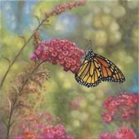 Monarch Butterfly Fine-Art Print