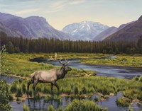 Meadows Of Grand Lake, Colorado Fine-Art Print
