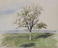 Honfleur, Garden With Two Fruit Trees, Seaside, 1864 Fine-Art Print
