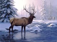 Elk In Winter Fine-Art Print