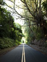 Old Pali Road Fine-Art Print