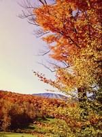 Vegas Autumn Fine-Art Print