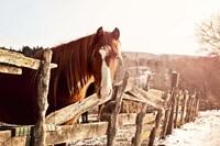 Brown Horse Fine-Art Print