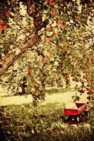 Apple Picking Fine-Art Print