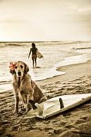 Dog Surfer Fine-Art Print