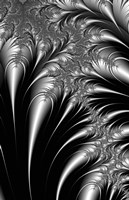 Plumes Black and White Fine-Art Print
