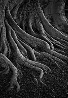 Entrenched Fine-Art Print
