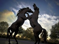Stallions Fine-Art Print