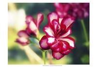 Pink Blossom I Fine-Art Print