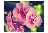 Pink Blossom II Fine-Art Print