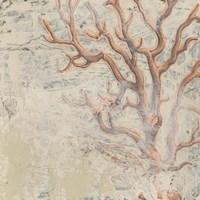 Coastal Cameo VI Fine-Art Print