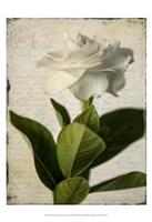 Gardenia Grunge I Fine-Art Print