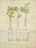 Herb Still Life I Fine-Art Print