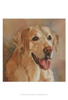 Calie Yellow Lab Fine-Art Print