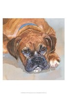 Baillie Boxer Fine-Art Print