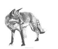Wildlife Snapshot: Fox Fine-Art Print