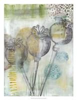 Seed Pod Composition II Fine-Art Print