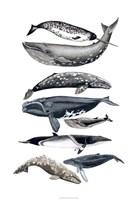 Whale Display II Fine-Art Print