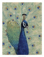Blue Peacock I Fine-Art Print