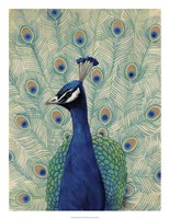 Blue Peacock II Fine-Art Print
