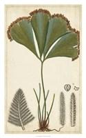 Foliage Botanique I Fine-Art Print