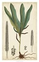 Foliage Botanique II Fine-Art Print