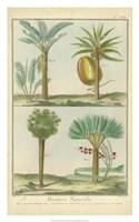 Histoire Naturelle Tropicals I Fine-Art Print