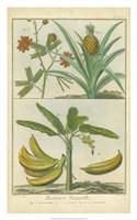 Histoire Naturelle Tropicals II Fine-Art Print