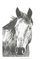 Wildlife Snapshot: Horse I Fine-Art Print