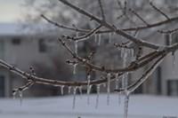 Frozen Trees Fine-Art Print