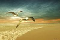 Soft Sunrise on the Beach 6 Fine-Art Print