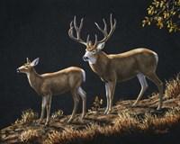 Mule Deer Ridge Fine-Art Print