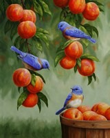 Bluebirds and Peaches Fine-Art Print
