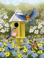 Bluebird Garden Home Fine-Art Print