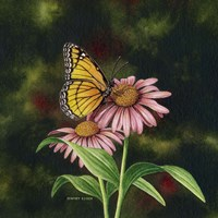 Coneflower of Choice 1 Fine-Art Print