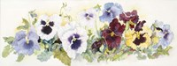 Pansies On Parade Fine-Art Print