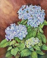 Blue Hydrangeas Fine-Art Print