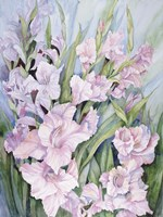 Gladiolus Fine-Art Print