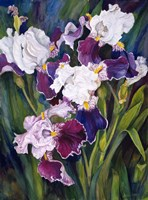 Wind Blown Iris Fine-Art Print