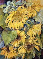 Cascading Sunflowers Fine-Art Print
