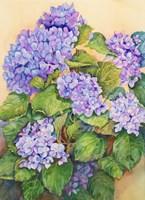 Easter Hydrangea Fine-Art Print