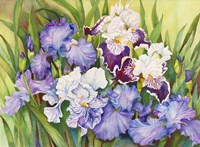 Irises in Shades of Lavender Fine-Art Print