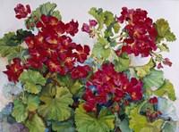 Deep Red Geraniums Fine-Art Print