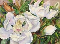 Magnolia Tree Fine-Art Print
