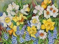 Daffodils And Grape Hyacinths Fine-Art Print