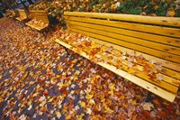 Quebec City Park Bench in Fall Fine-Art Print