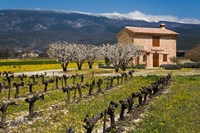 Stone House and Vineyard, Mt Ventoux Fine-Art Print