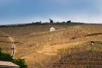 Terraced Vineyards in the Cote Rotie District Fine-Art Print