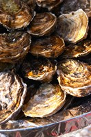Plate of Oysters, France Fine-Art Print