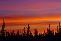 Sunrise Over a Boreal Forest Fine-Art Print